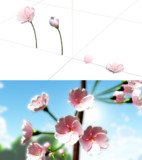 桜の花セット