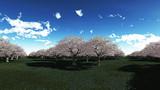 【MMDステージ配布】桜の公園  T5【スカイドーム】