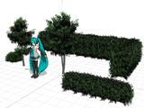 ヒサカキの立木 植え込み 生垣 のセットです。