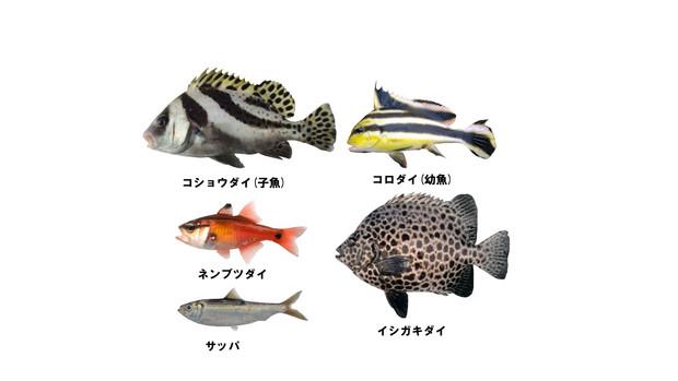 【MMD-OMF5】俺得魚類セット