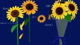 【MMDアクセサリ配布】ひまわりの花束