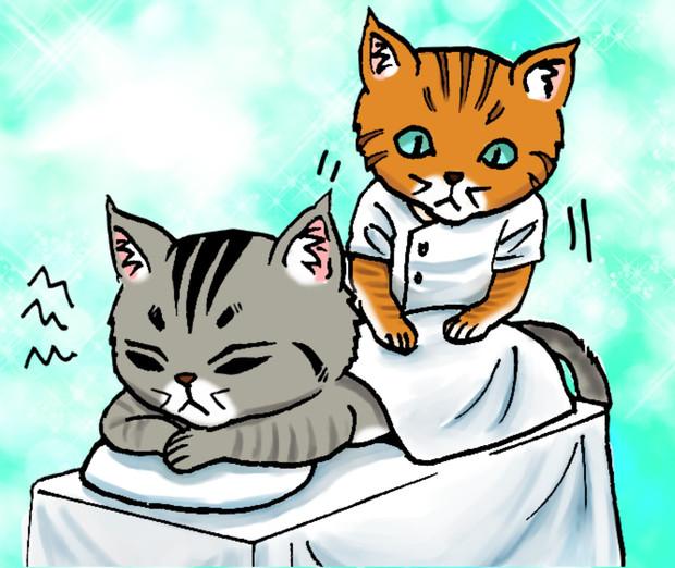 シマ猫カブとマッサージ
