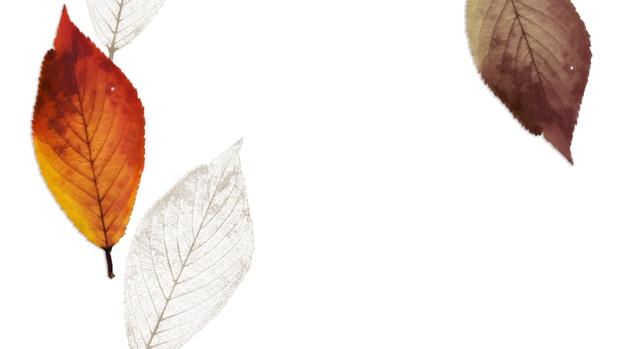 葉脈標本と枯れ葉 Azyazya さんのイラスト ニコニコ静画 イラスト