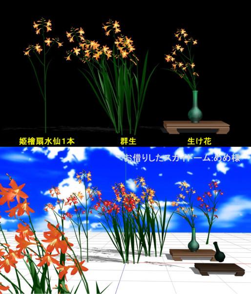 姫檜扇水仙(クロコスミア) 配布