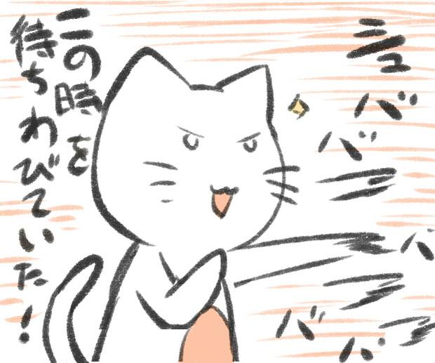 艦これ夏イベント開始であらぶる猫