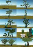 松の木・他