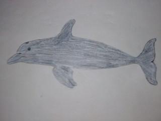 イルカのイラスト