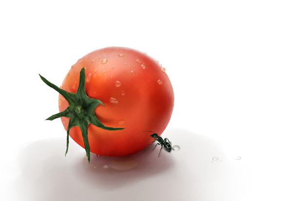 トマトと蟻