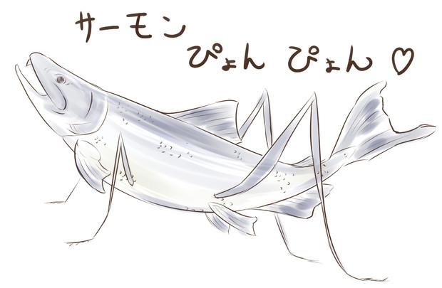 野生のサーモン