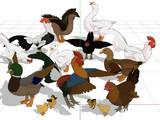 【配布】家禽セット【OMF6】