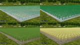 田畑のある山間の稲テクスチャ追加