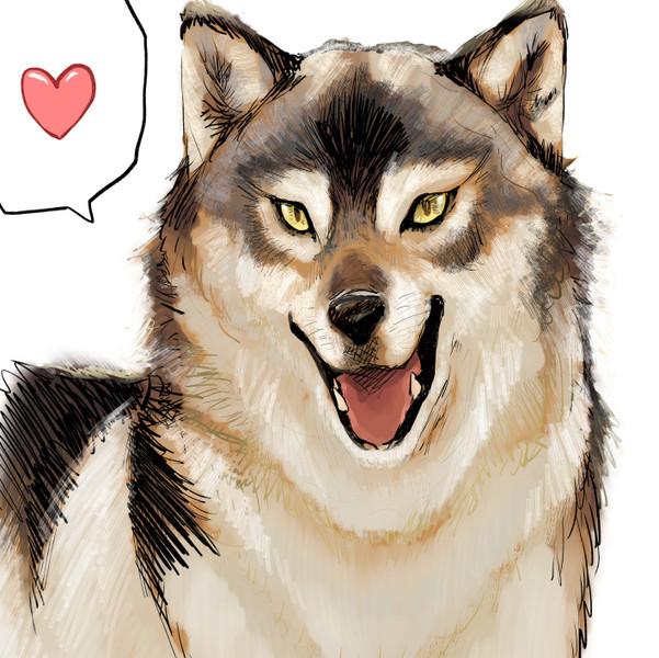 オオカミのような犬のような