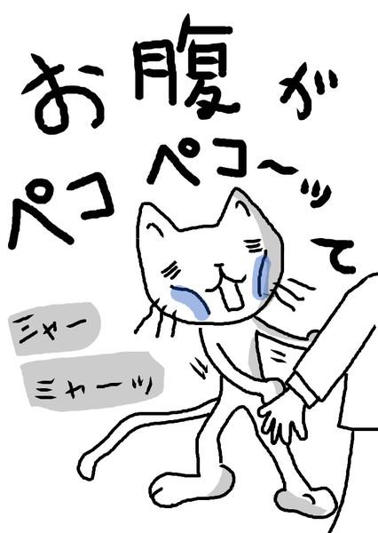 猫ニャーがおねだりしてます