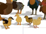 【配布】ニワトリとアヒルに雛鳥追加しました。【MMD】