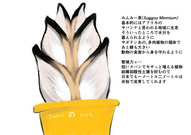 みんみー草