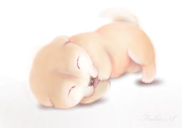柴犬‐動画用リメイク‐