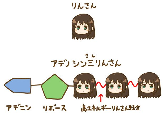 アデノシン三リン酸 / めだか さ...