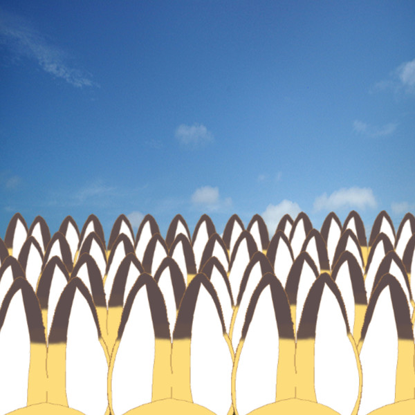みんみー畑