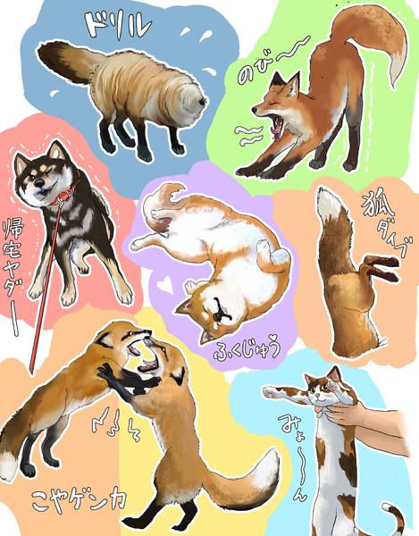 よく見る動物の可愛い仕草♡