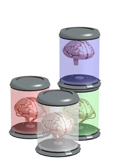 【モデル配布】SF脳ケース