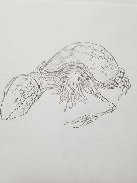 右利き海洋生物