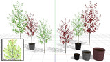 小さな植木(MMDアクセサリ配布)