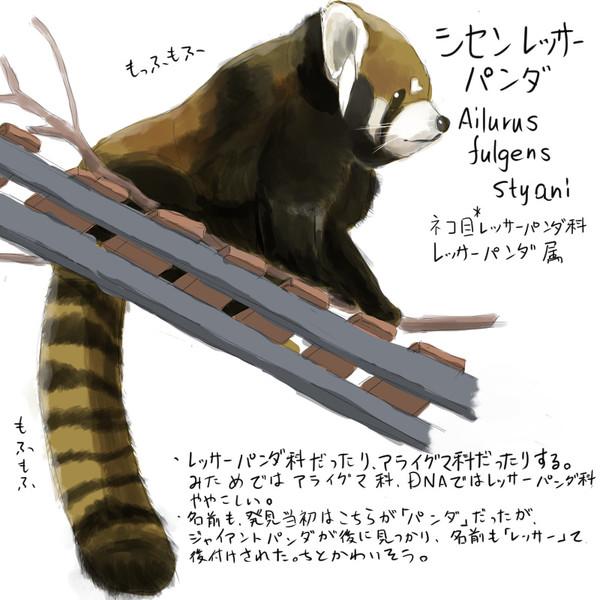どうぶつ図鑑 レッサーパンダ