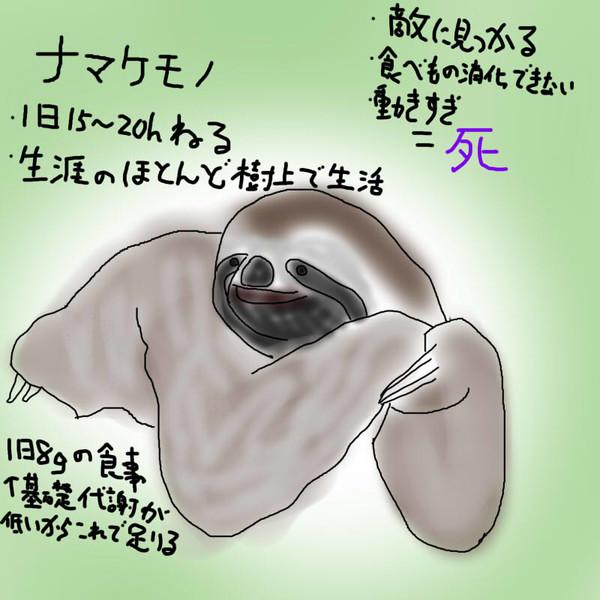 どうぶつ図鑑~ナマケモノ~