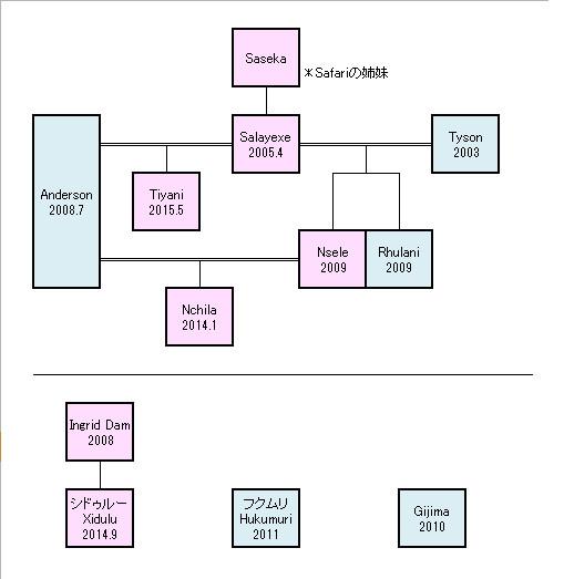 がおーっヒョウの家系図詳細版2サファリライブ 想 さんの