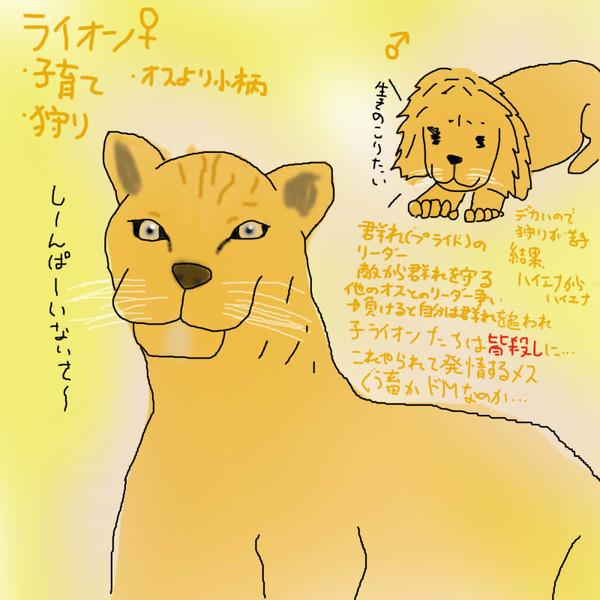 どうぶつ図鑑~ライオン~