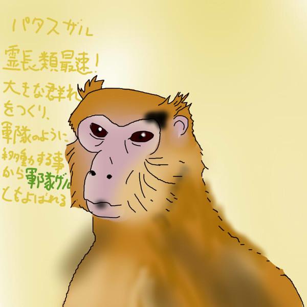 どうぶつ図鑑~パタスザル~