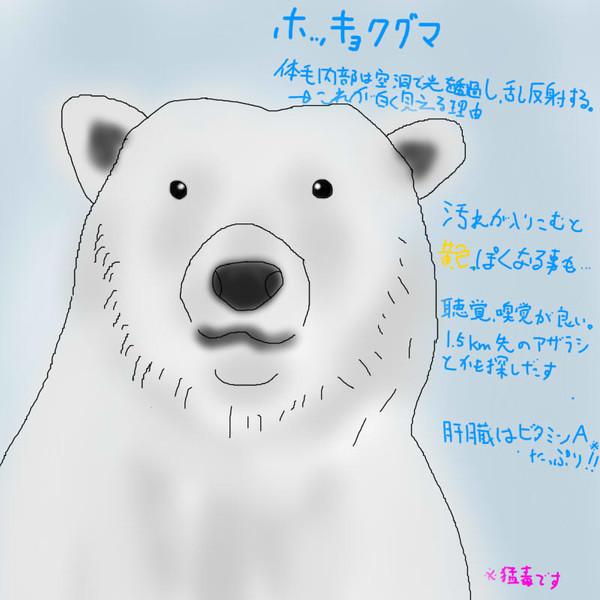 どうぶつ図鑑~ホッキョクグマ~
