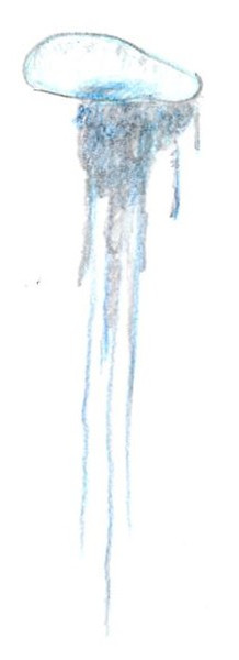 カツオノエボシ