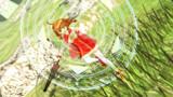 【MMD】リルカの魔法?【MMDWA】