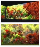 秋の京都風 望楼スカイドーム