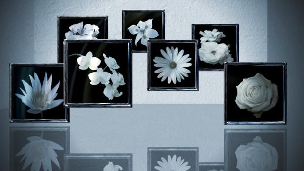 花ステージ