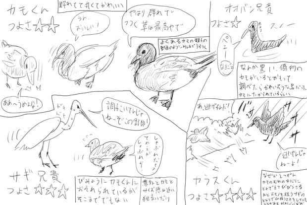 水辺の野鳥 強さランキング