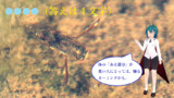 【冬休み企画クイズ・マイナー昆虫列伝-その1】水生昆虫