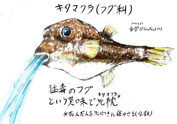 水を吐くフグ(キタマクラ)