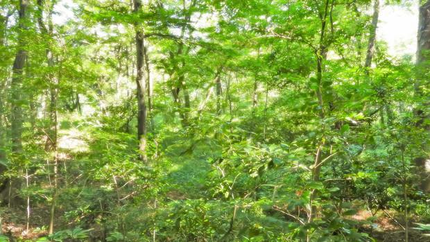 日の当たる森の中