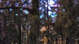 薄暗い林の中