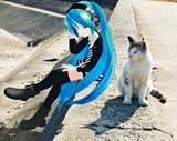 ミクさんと猫②