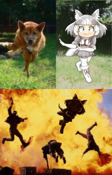 飛び跳ねるイエイヌちゃん