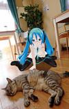 ミクさんと猫カフェ②