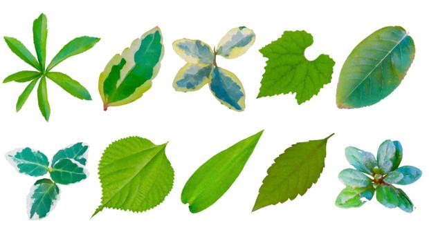 葉っぱイラストフリー素材いろいろ01